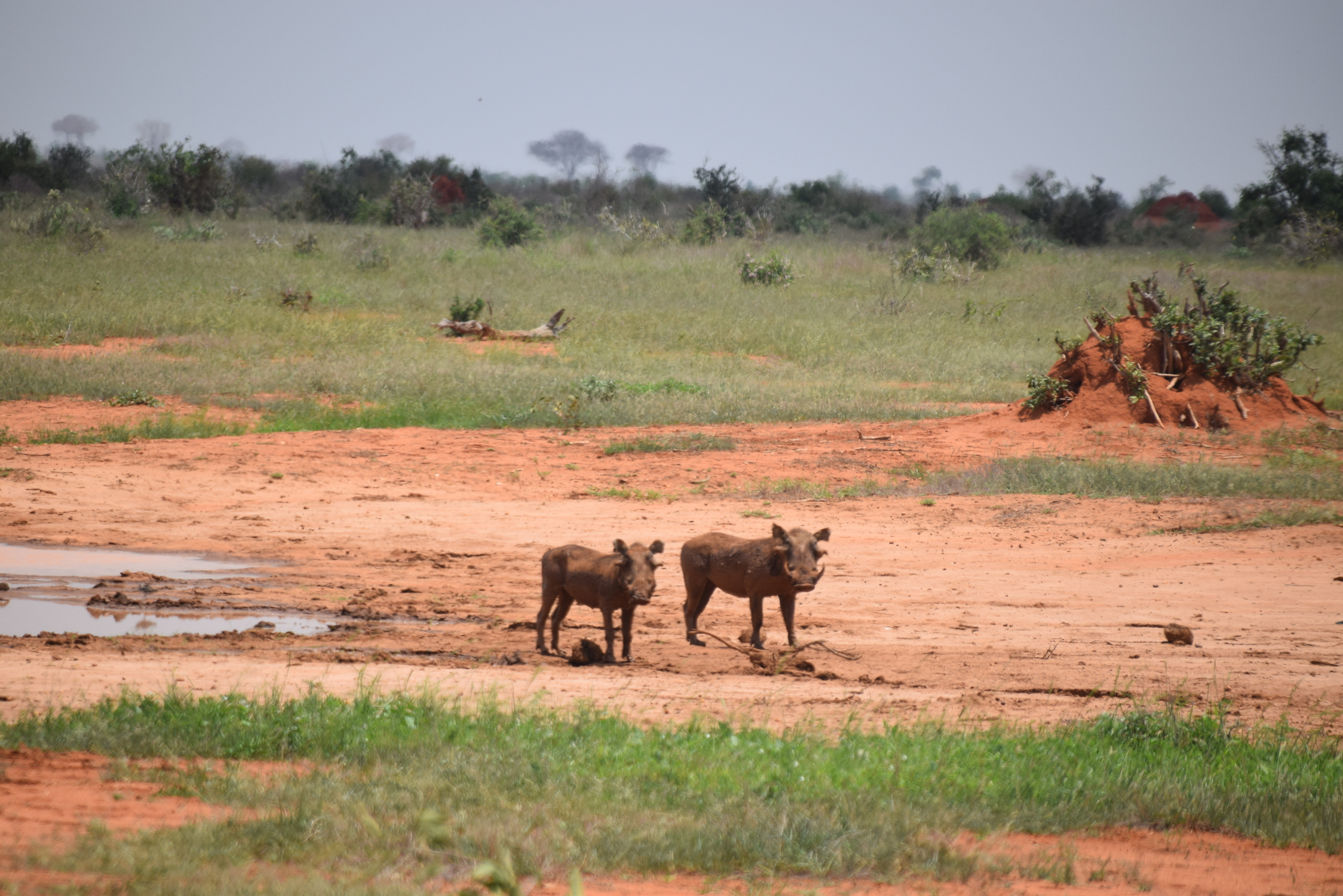 30-Tsavo-East-Gamedrive-063