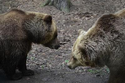 berenbos