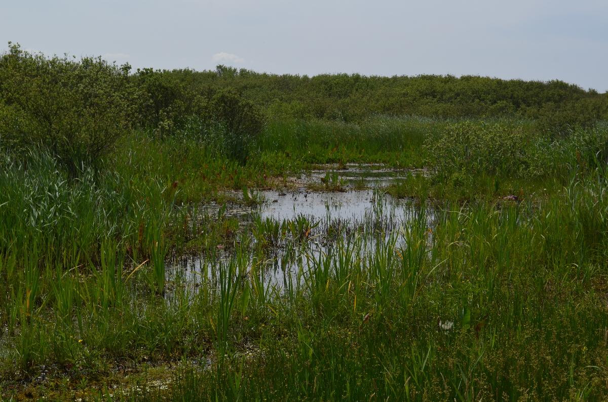 CallantsoogZwanenwater091
