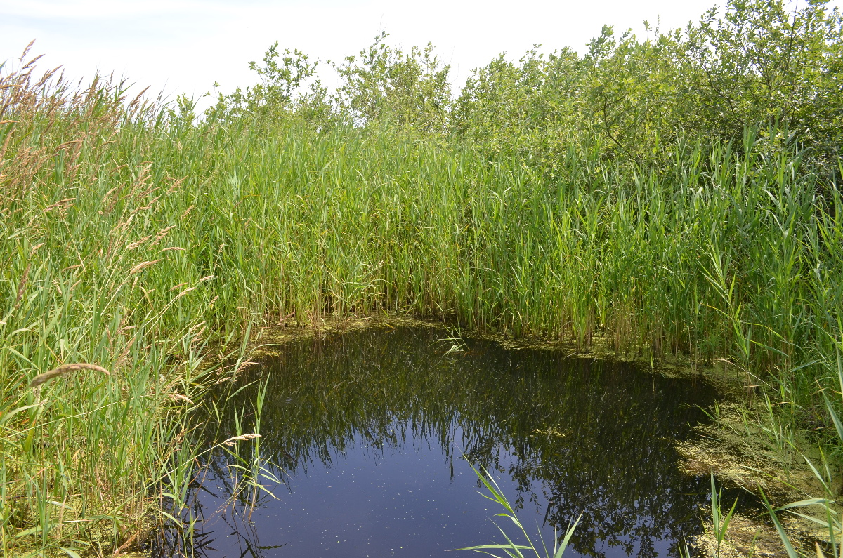 CallantsoogZwanenwater183