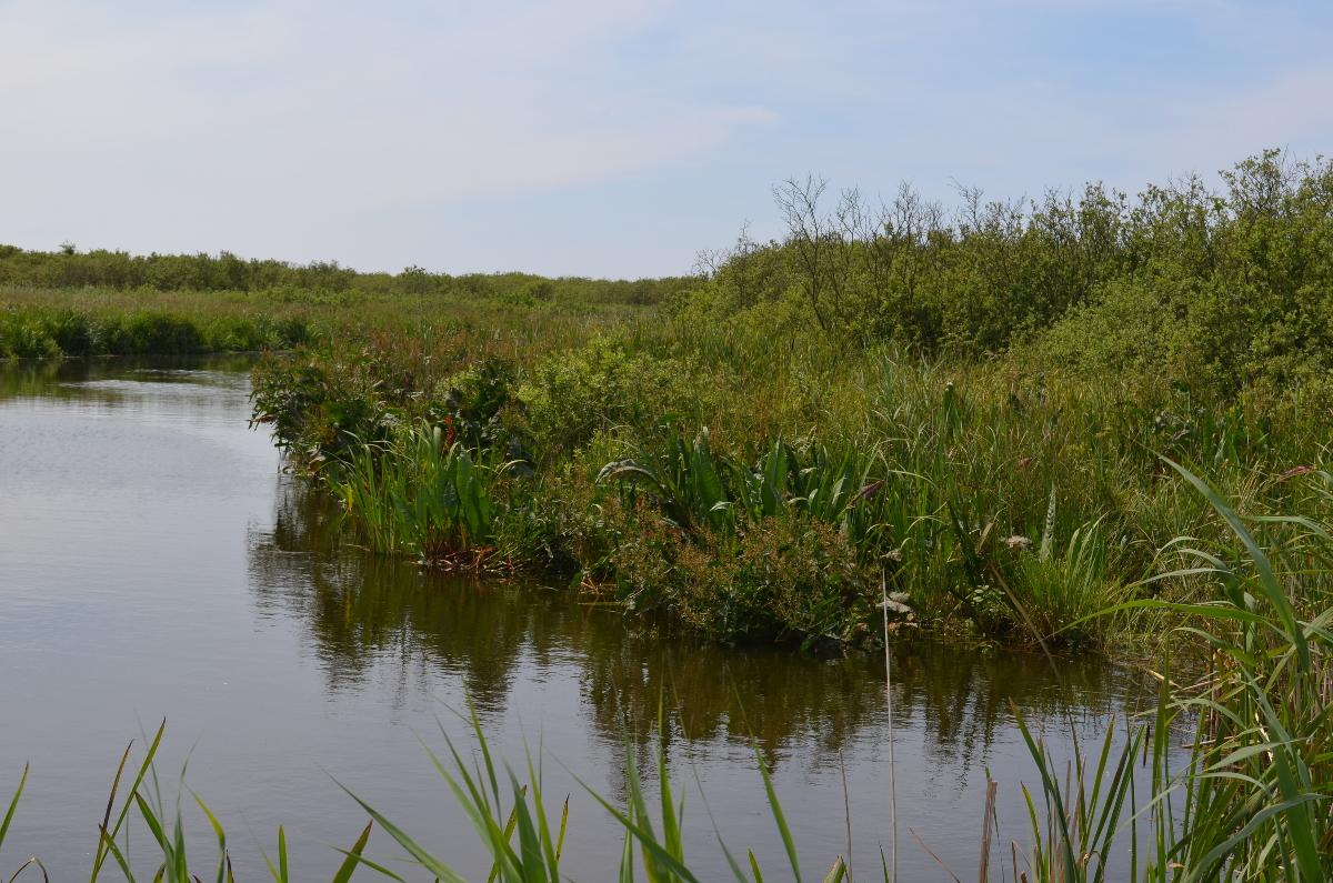 CallantsoogZwanenwater211