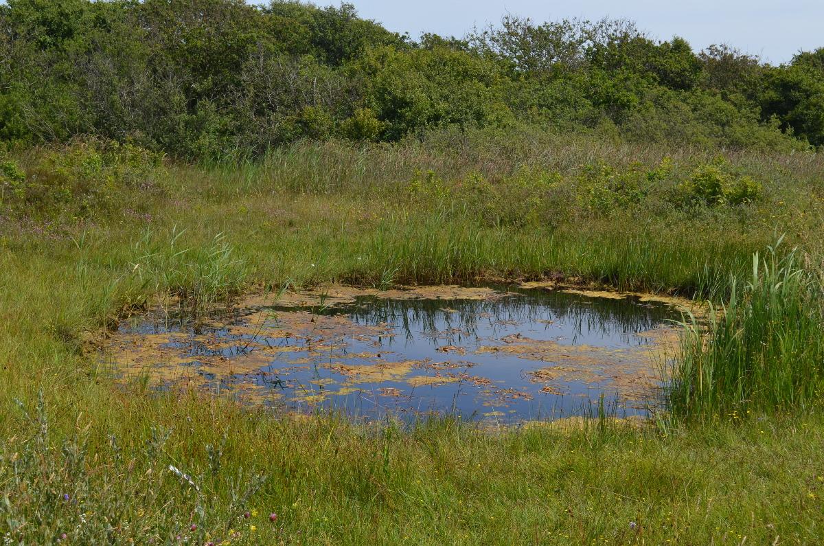 CallantsoogZwanenwater245
