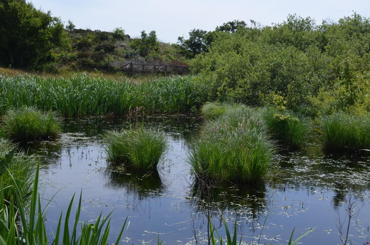 CallantsoogZwanenwater251